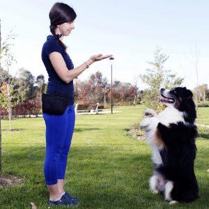 Australian Shepherd Training Park Selective focus