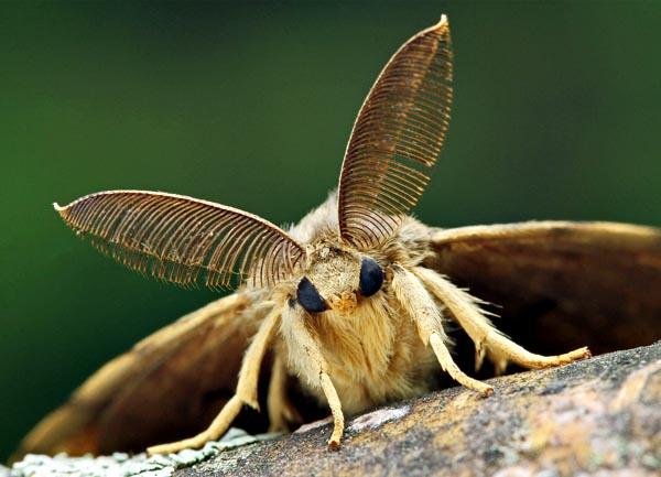 How long do moths live?