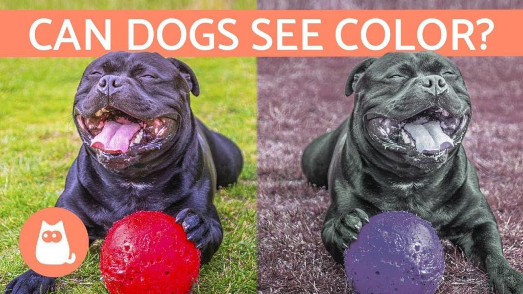 Do dogs see colour like Humans