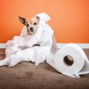 Housetraining-dog