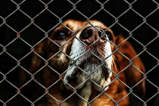 How much would it cost to open a pet sanctuary?