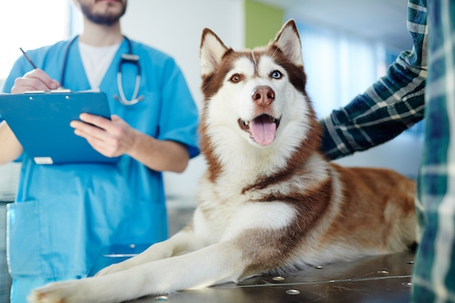 How often should i take my dog to the vet