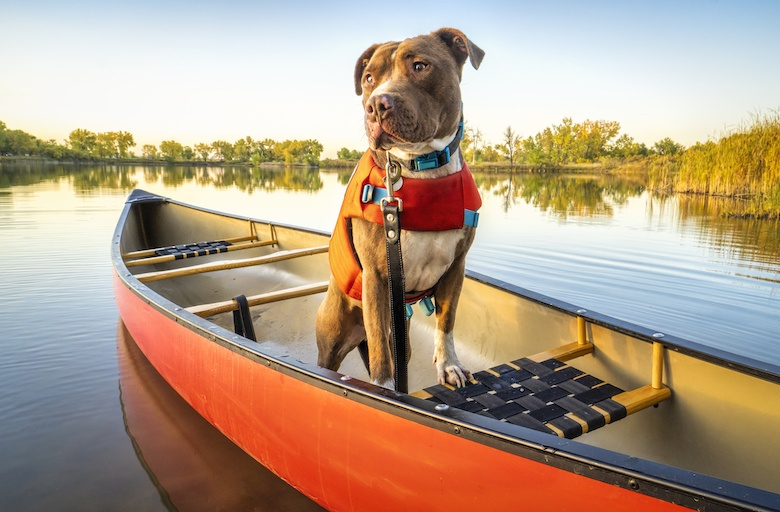 Do dogs naturally know how to swim