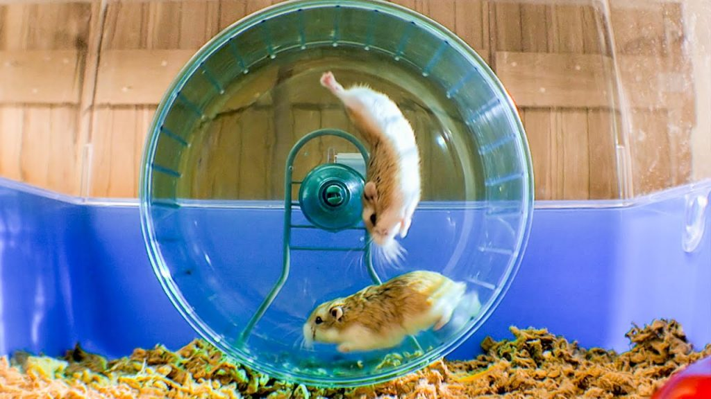 How To Comfort A Dying Hamster?