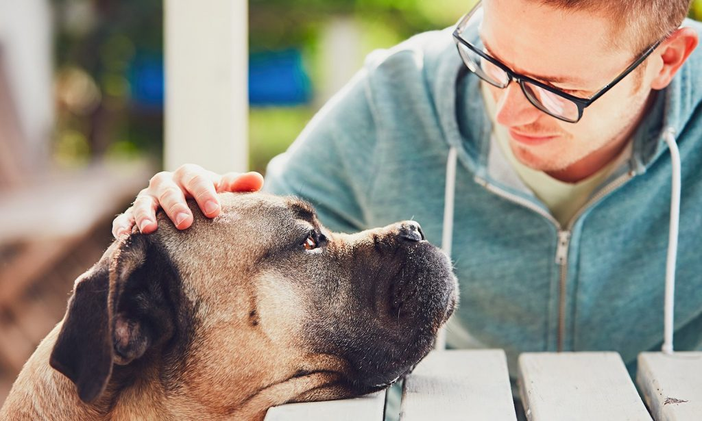 How to deal with the death of a beloved pet