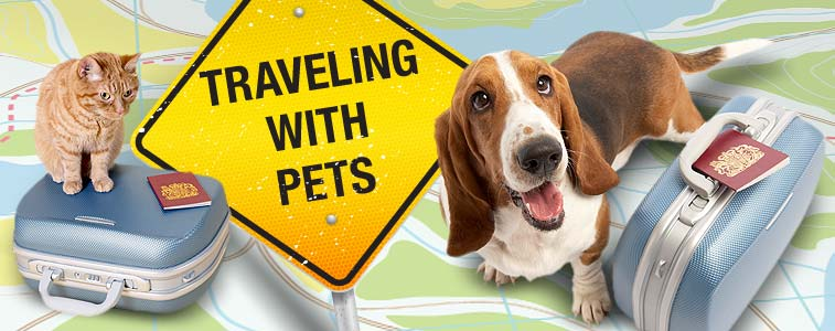 How to go on vacation with a Pet