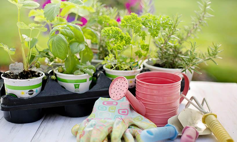 Organic gardening tips for all beginners