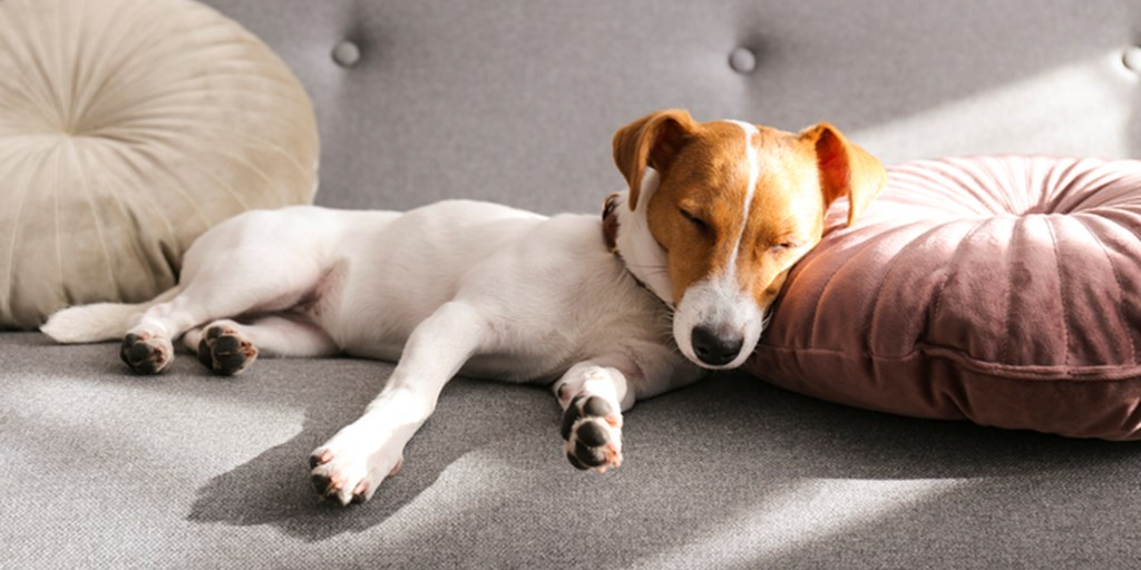 Why is my dog snoring so loud all of a sudden? It is not unusual for pet owners to allow their pets to sleep with them at night.